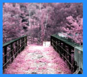 2016暖冬桜満開咲く時期